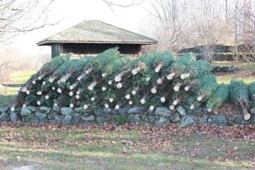 Christmas trees wrapped and ready at Rocks Estate, which also has a gift shop, hiking trails, and great mountain views.
